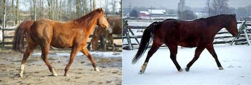 sarahs sugar bear before and after